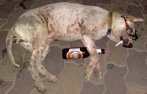 Drunk Dog 3